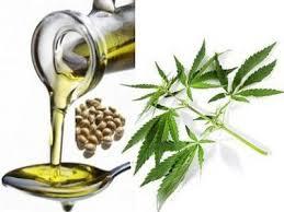 Les bienfaits de l'huile de chanvre