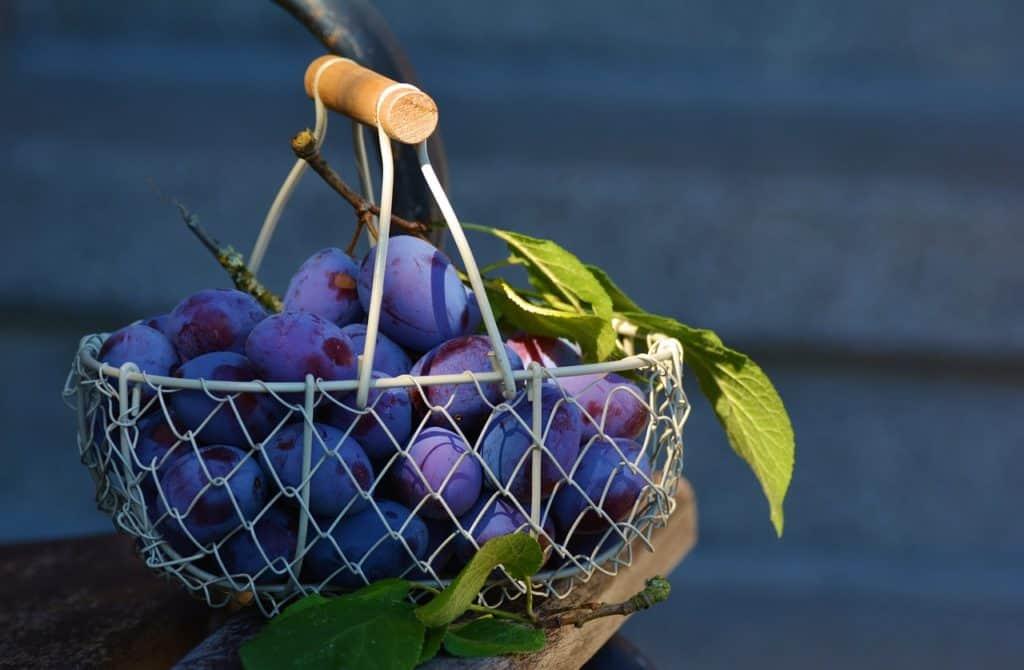 Les atouts de la prune pour le sportif