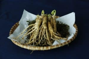 Le cordyceps sinensis : la plante préférée des sportifs d'endurance