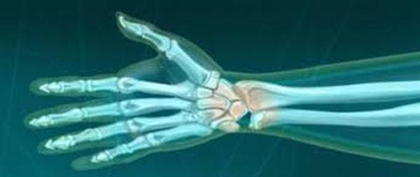 Focus sur les muscles du poignet