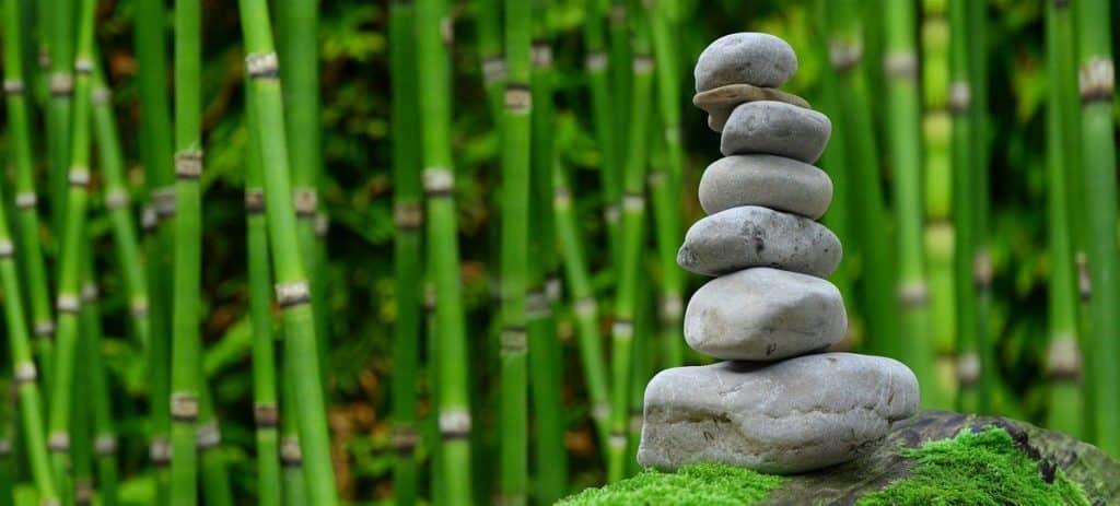 Le bambou: un remède idéal pour vos problèmes articulaires et osseux