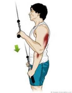 Triceps à la poulie haute