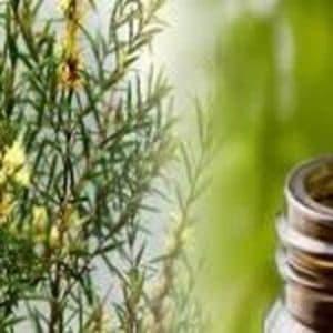 Les bienfaits de l'huile essentielle de calophylle