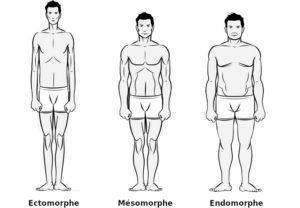 Morphotypes: pas tous égaux face à la minceur et à la prise de muscle ?