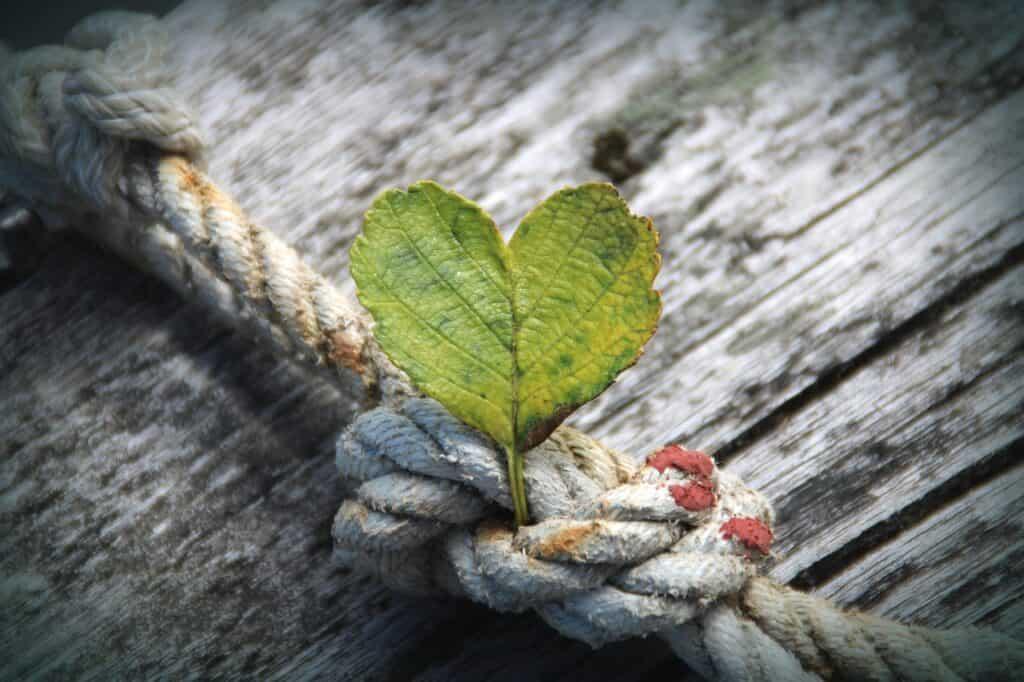 Attirer l'abondance le pouvoir de la gratitude